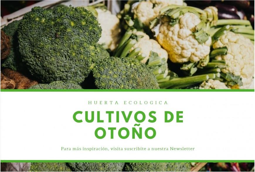 Planificación de los Cultivos de Otoño en la Huerta Ecológica